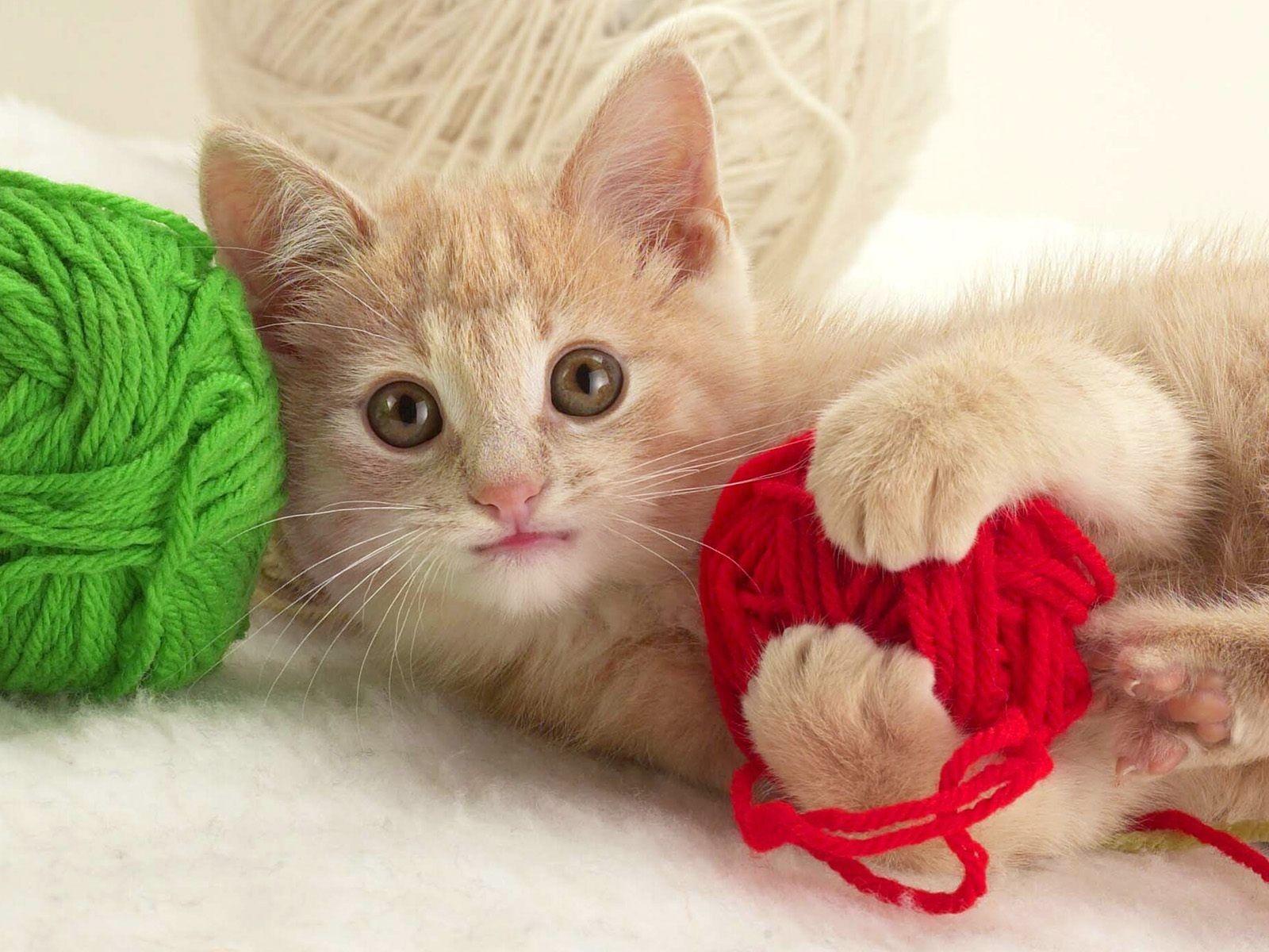 Van Mij Kitten Wallpaper Kittens Cutest Cute Cat Gif