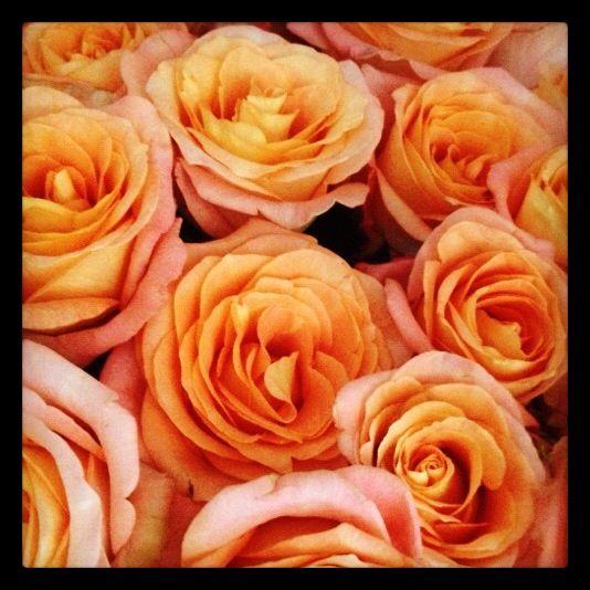 Me encantaron mis flores