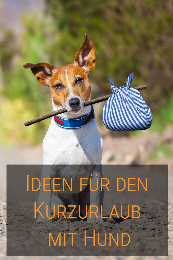 Tolle Ideen Fur Euren Perfekten Kurzurlaub Mit Hund Urlaub Mit Hund Hund Aktivitaten Hund Reisen