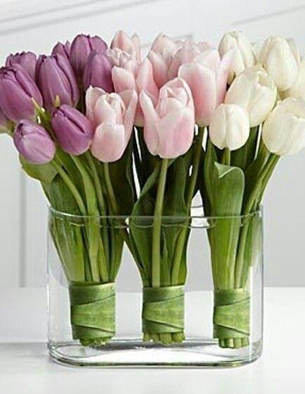 Roses ♡