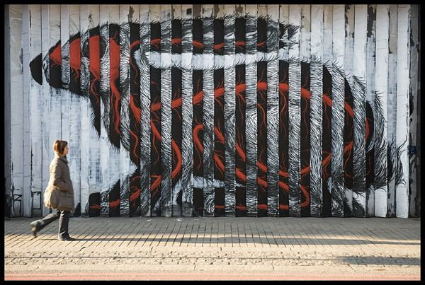 Awesome Street Art By Roa 3 Pics With Images Street Artists