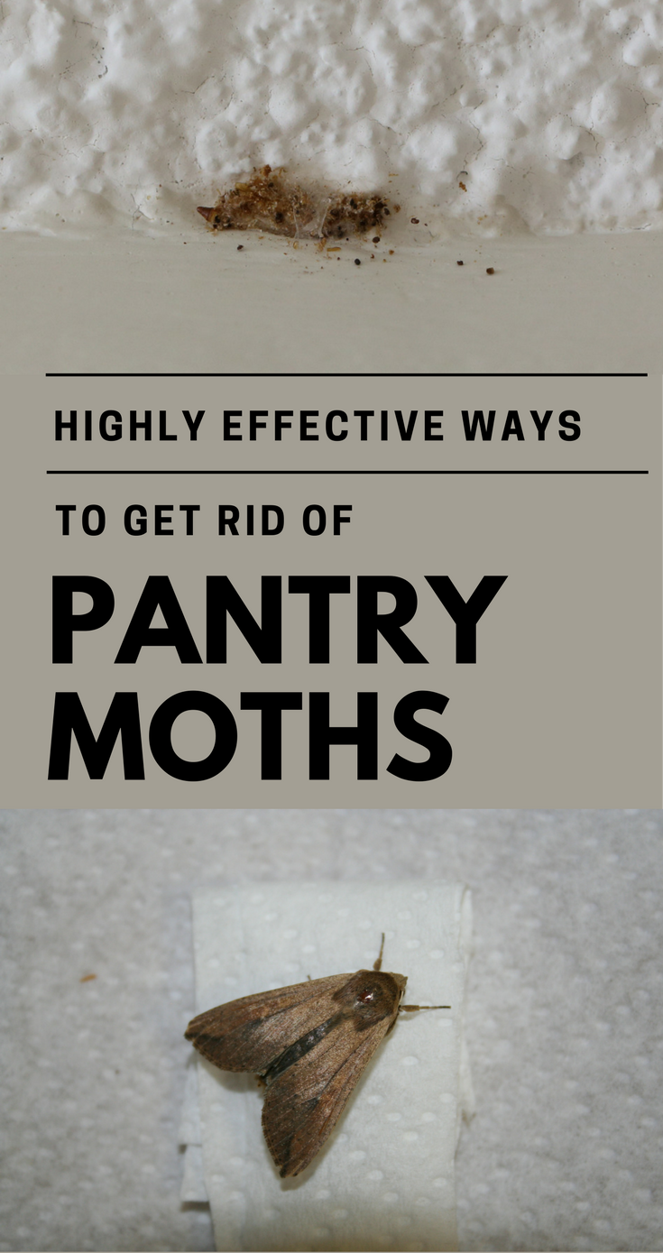33d808fcd03d8d7f3a194ae62807b5e6 - How To Get Rid Of Pantry Moths And Larvae