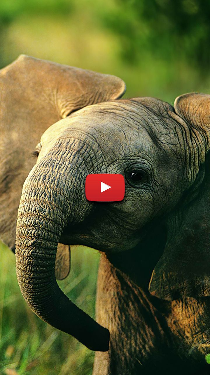baby elephant wallpaper aesthetic elephant