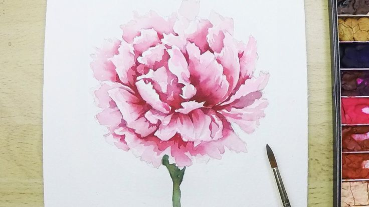 Lvl4 How To Paint A Carnation Flower In Watercolor Flower Drawing Carnation Drawing Flower Painting