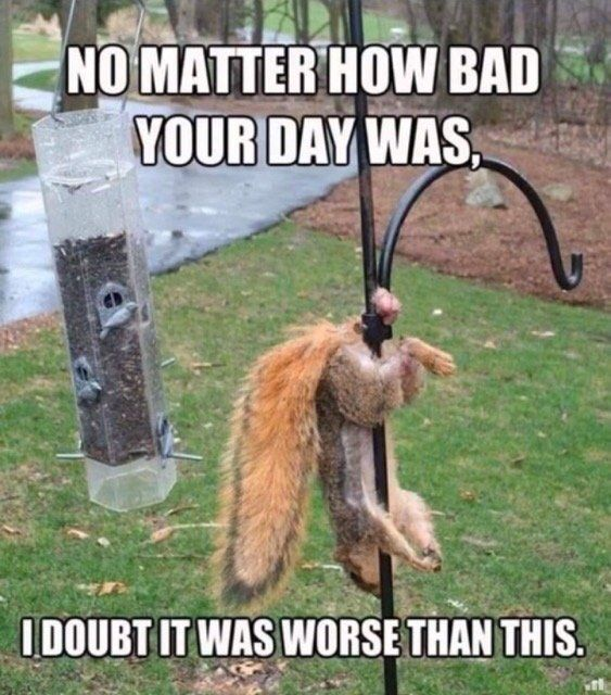 No matter how bad your day was in 2020 | Bad day, Memes ...