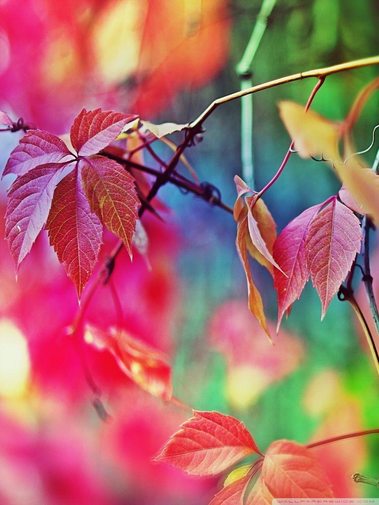 Colorful Flowers HD Desktop Wallpaper High Definition