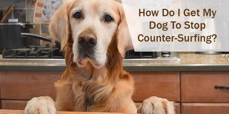 How do i get my dog to stop countersurfing hund diy