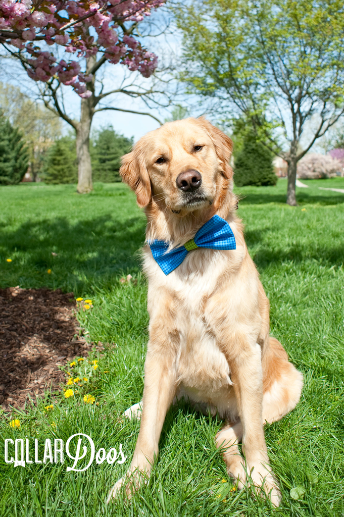 Wonderful Collar Bow Adorable Dog - 33da58cf5d9b41c2b86f466ccb74e23d  Perfect Image Reference_855720  .png