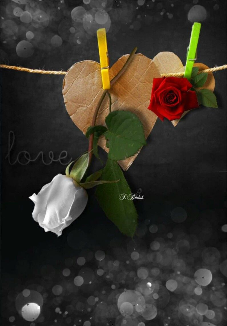 Pin by galal ahmad on romantic pinterest amazing art colour colour splash beautiful flowers color phone wallpapers hearts good morning images for good night flower photos roses izmirmasajfo