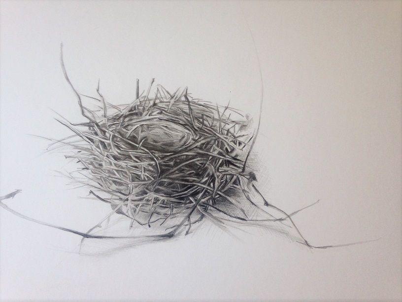 Line Drawing Nest : Pencil drawing of a bird s nest art denise weinert