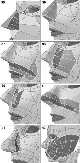 modelado Nariz   3D   Pinterest   Nariz, Modelado y Anatomía