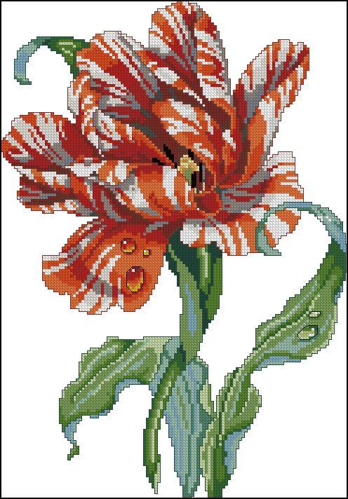 "Sacha esquema bordado ""Tulipa do papagaio"""
