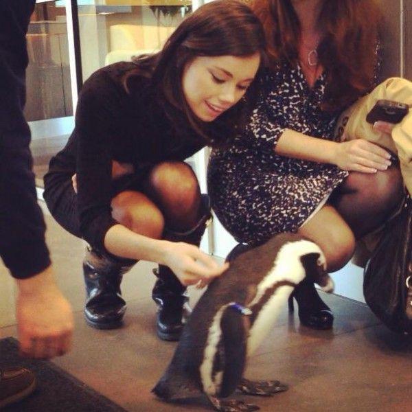 jo ling kent fox news girls pinterest business women fox and