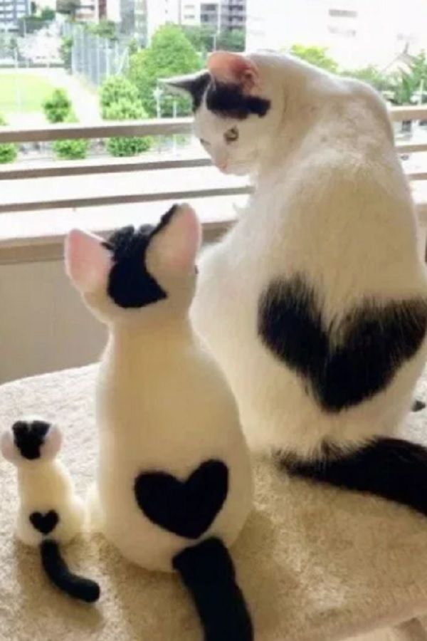 Cat With Heart Shaped Marking Is Melting H E A R T S Cute Cats