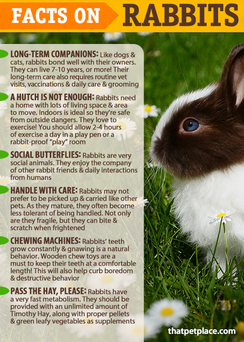 Facts On The Care Keeping Of Rabbits Are Rabbits The Right