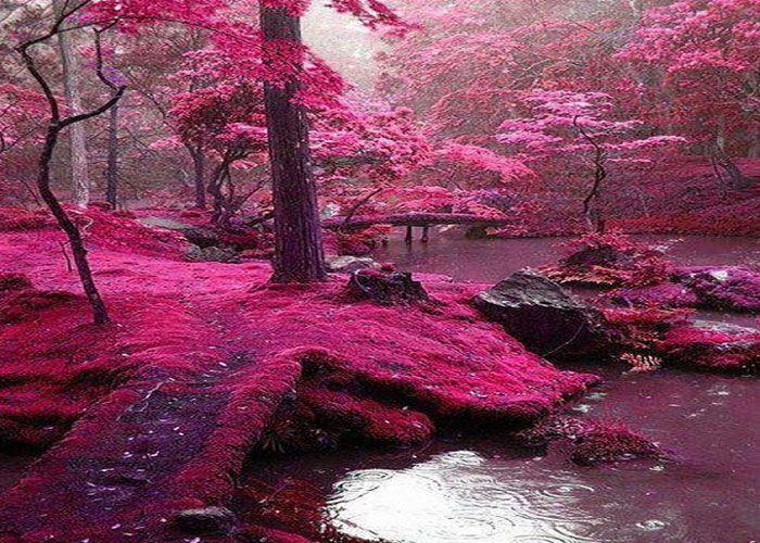 bosque rosa en irlanda en bridges park - Buscar con Google