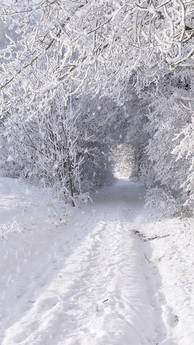 Winter Wonderland Iphone Wallpaper Paysage Hiver Paysage