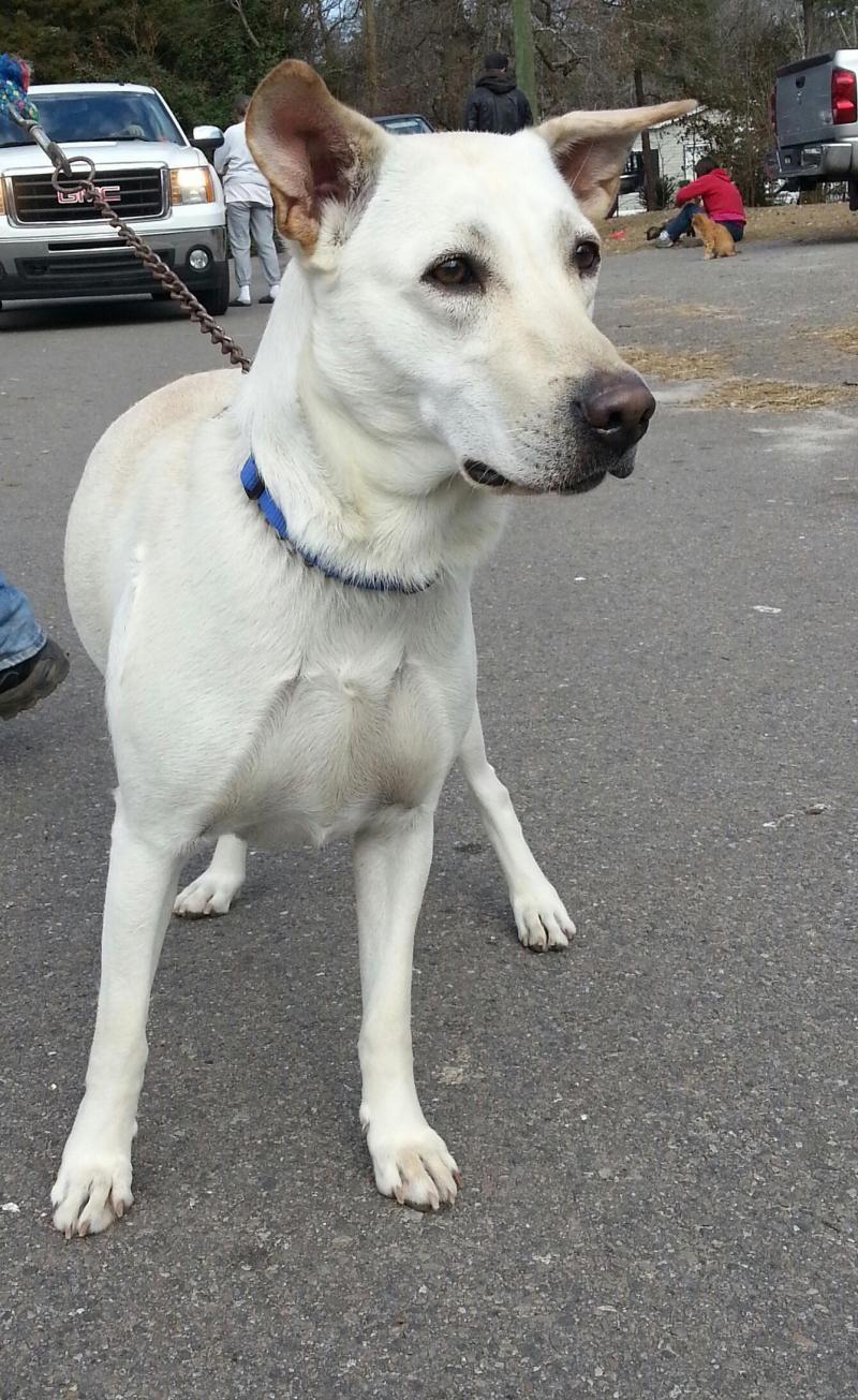 15++ Carolina animal rescue and adoption ideas