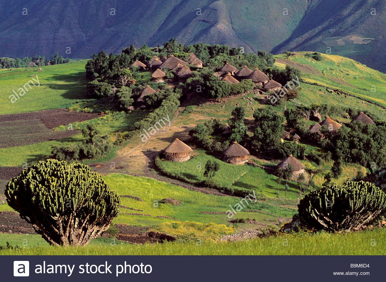 Ethiopia, Wolo, Lalibela area, village of Wollo tukuls (huts