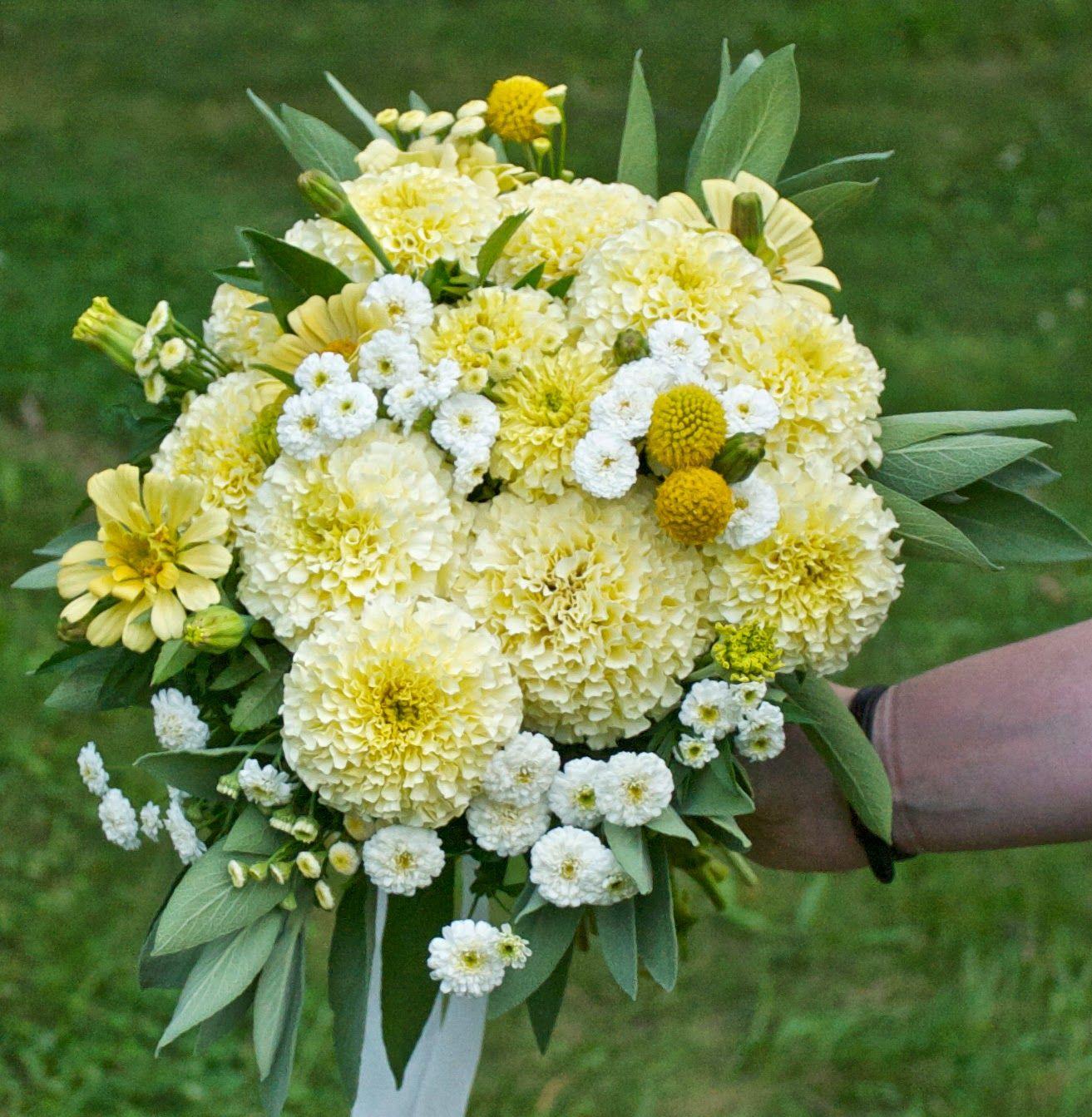 Marigold Vanilla Improved Hybrid Zinnia Creamy Yellow Giant