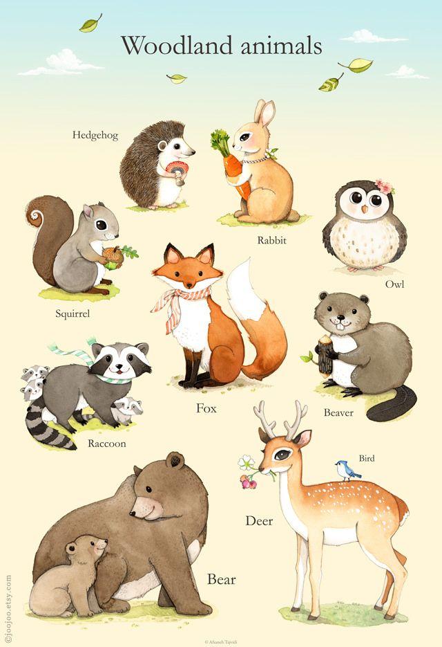 Woodland animals poster   Animales, Dibujo y Ilustraciones