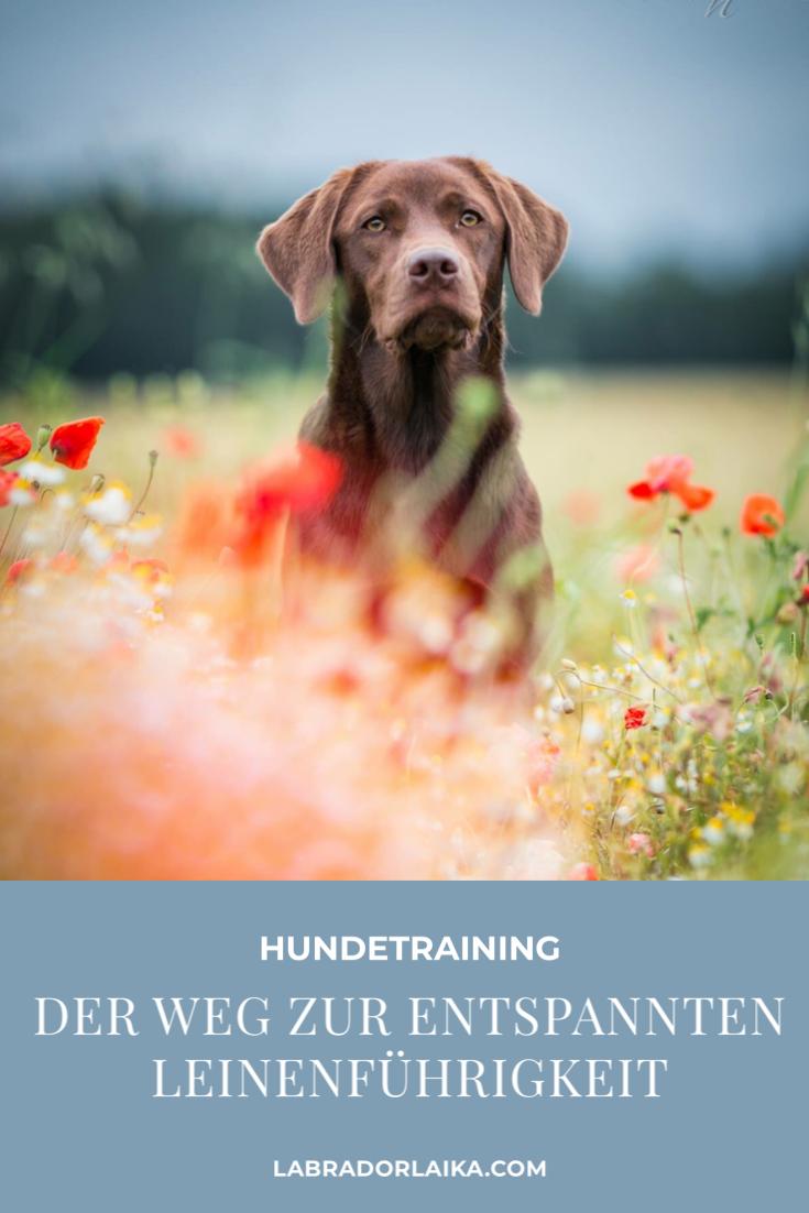 Pin Auf Hunde I Training