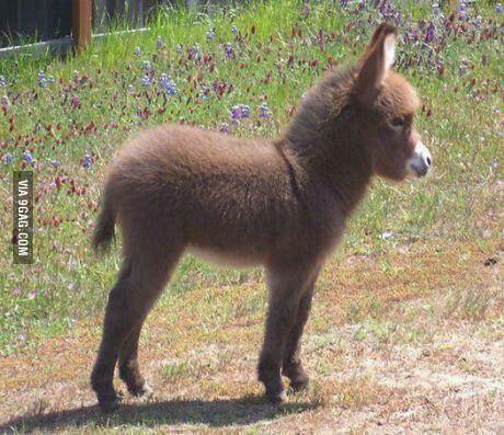 Donkey cuteness, via 9gag