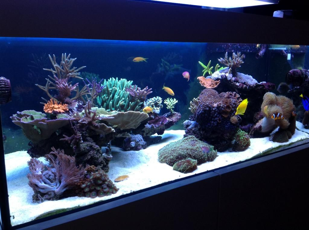 Aquascaping show your skills page 30 reef central for Narrow fish tank
