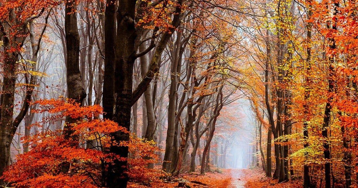 Paling Keren 30 Wallpaper Alam Kabut Alam Lanskap Musim Gugur Hutan Daun Kabut Jalan Download Gambar Pemandangan P In 2020 Nature Photography Nature Scenes Nature