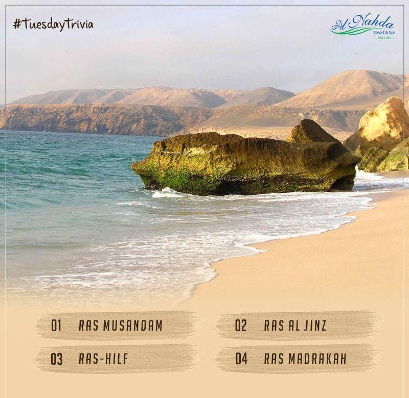 In Oman Is An Important Turtle Nesting Site For The Endangered Green Turtle Guess Alnahdaresort Nature Luxuryresort Luxury Resort Resort Spa Resort