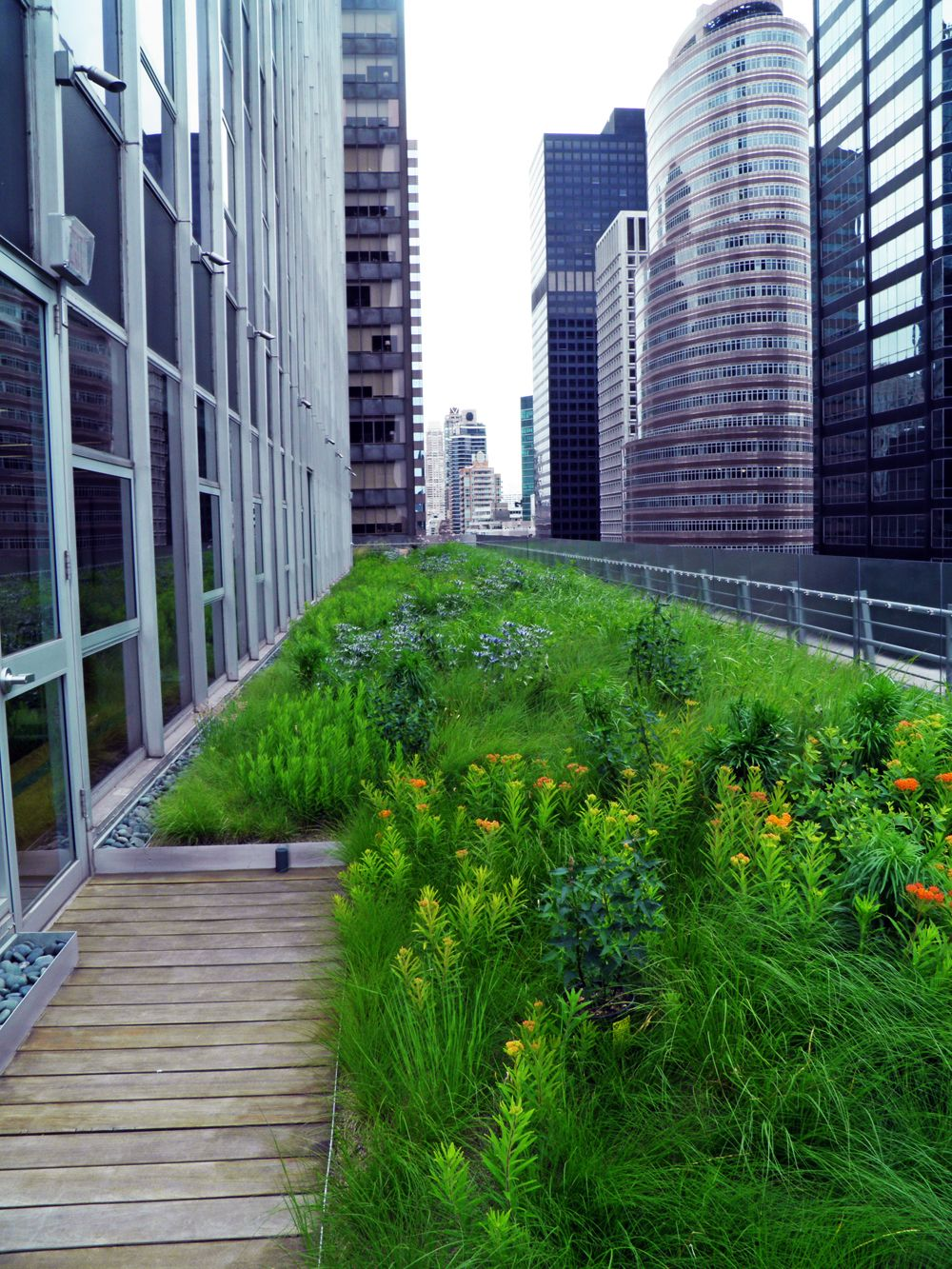 Nyc Office Rooftop Garden Designed By Hmwhite Commercial Landscape Design Rooftop Garden Landscape Design