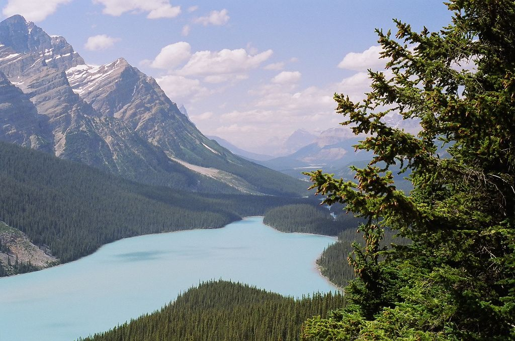 North American Forests Bing Images Mountain Landscape Forest Landscape Landscape