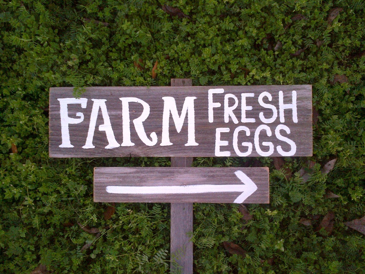 Farm Fresh Eggs Sign Farmers Gift Hand Painted Wood Sign