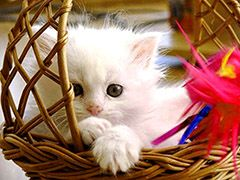 Cute Kitten Baby Cat Wallpaper Sitting Basket Wallpaper Free Download Baby Cats Kittens Cutest Cute Baby Cats