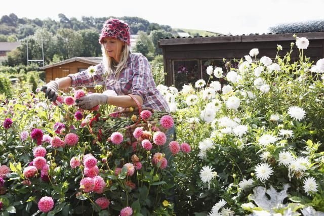 10 Terms Every Organic Flower Gardener Should Know
