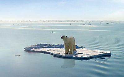 Toddler Discipline Tricks That Work Polar Bear Bear Animals