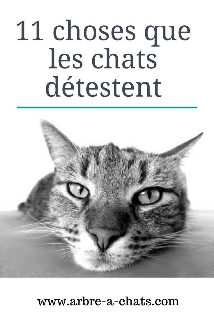 Tout Savoir Sur Les Chats : savoir, chats, Choses, Chats, Détestent, Arbre-a-chats.com, Femelle,, Astuces, Chat,, Comportement