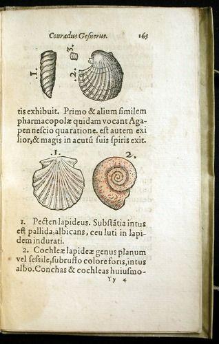16thCentury / GesnerK / 1565a / Konrad Gesner, De rerum fossilium (Tiguri, 1565)