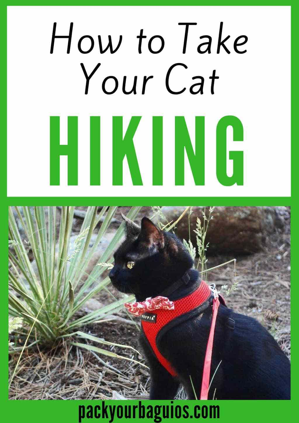How to Take Your Cat Hiking Pet travel, Adventure cat