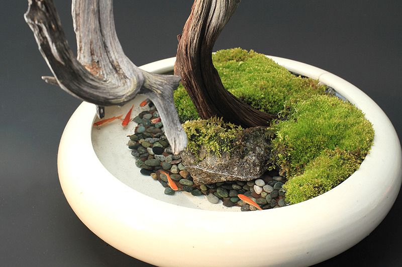 Mini pond and garden