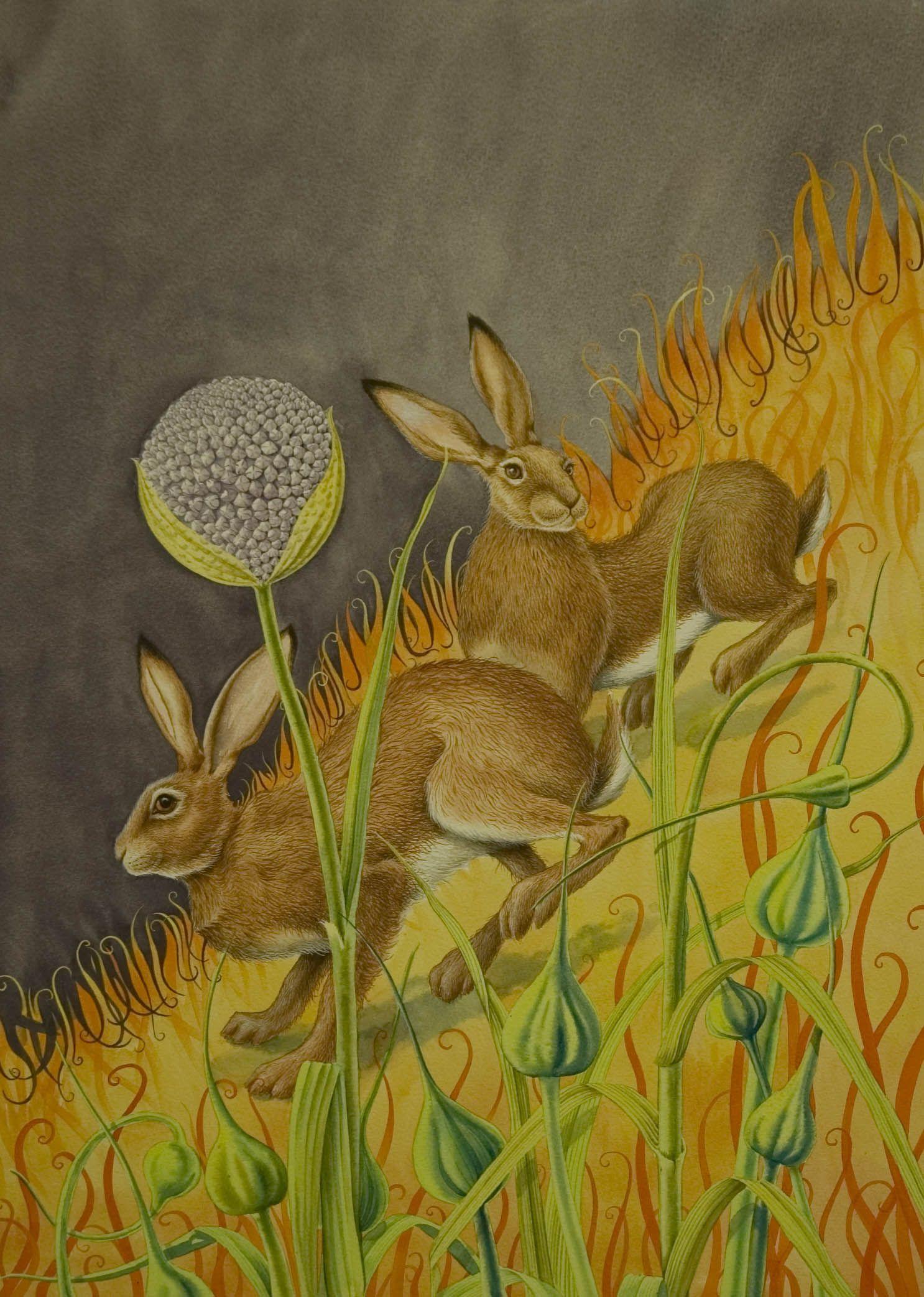 'Flaming June' - Sandra Pond