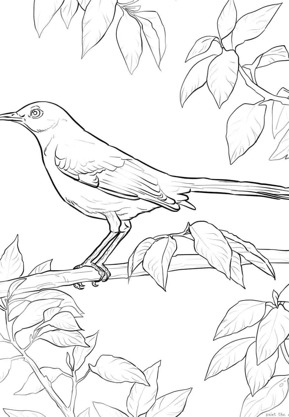 Northern Mockingbird coloring page from Mockingbird category Select from  27464 printable crafts o… in 2020 | Bird coloring pages, Flower coloring  pages, Flag coloring pages