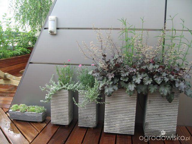 Galeria Zdjec Letnie Kompozycje Kwiatowe Na Balkon I Taras Ogrodowisko Plants