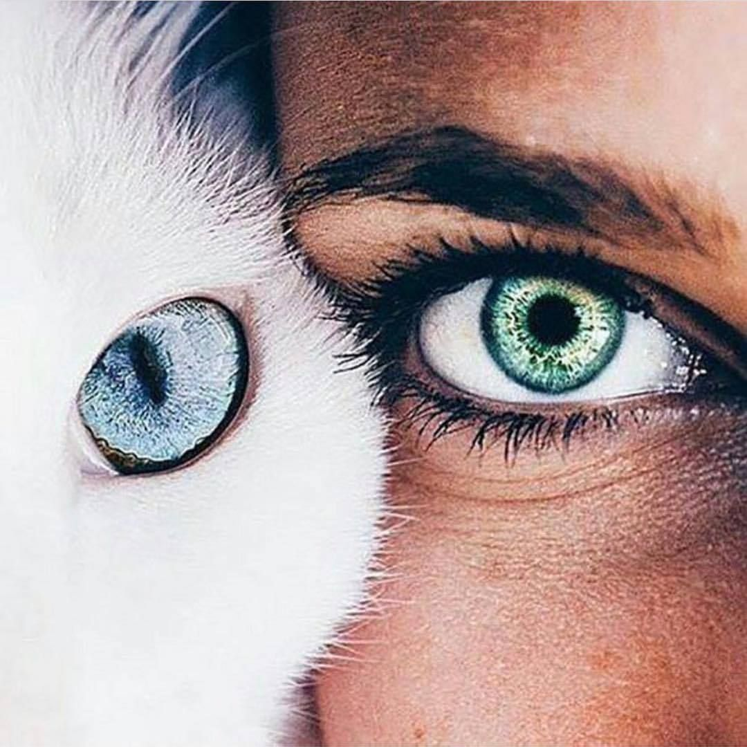 makeup | • wow • | beautiful eyes color, beautiful eyes