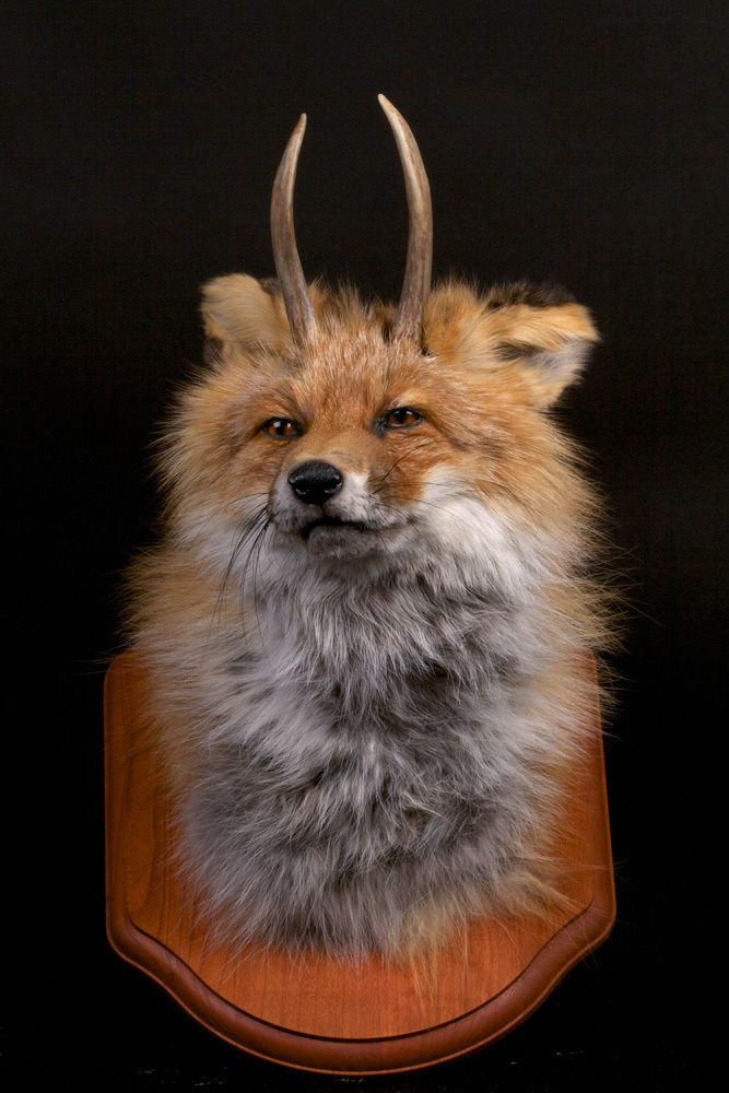 Taxidermy Went Rogue | Taxidermy, Rogues and Exhibitions