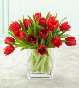 Red Tulips In A Vase Rote Tulpen Bedeutung Von Blumen Tulpen In Vase