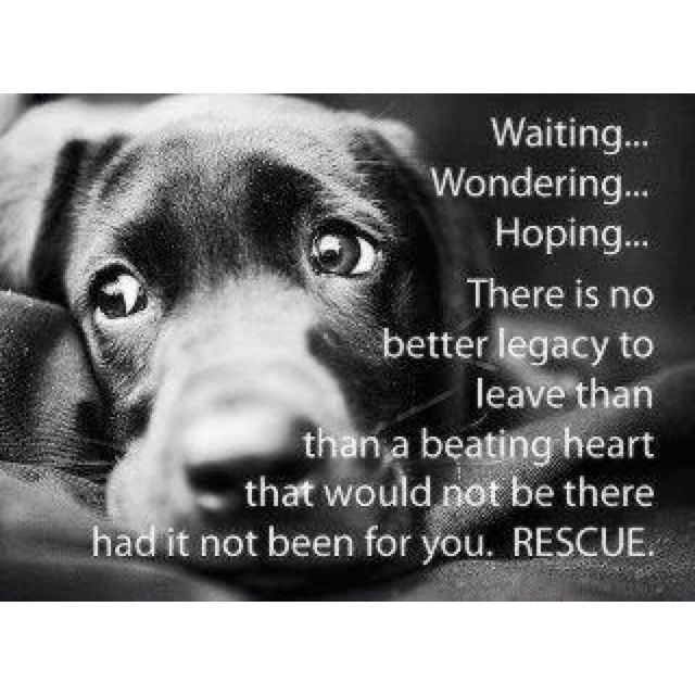 Pin By Randy Mcpeek On My Dog My Friend Rescue Dogs Dogs Dog Quotes