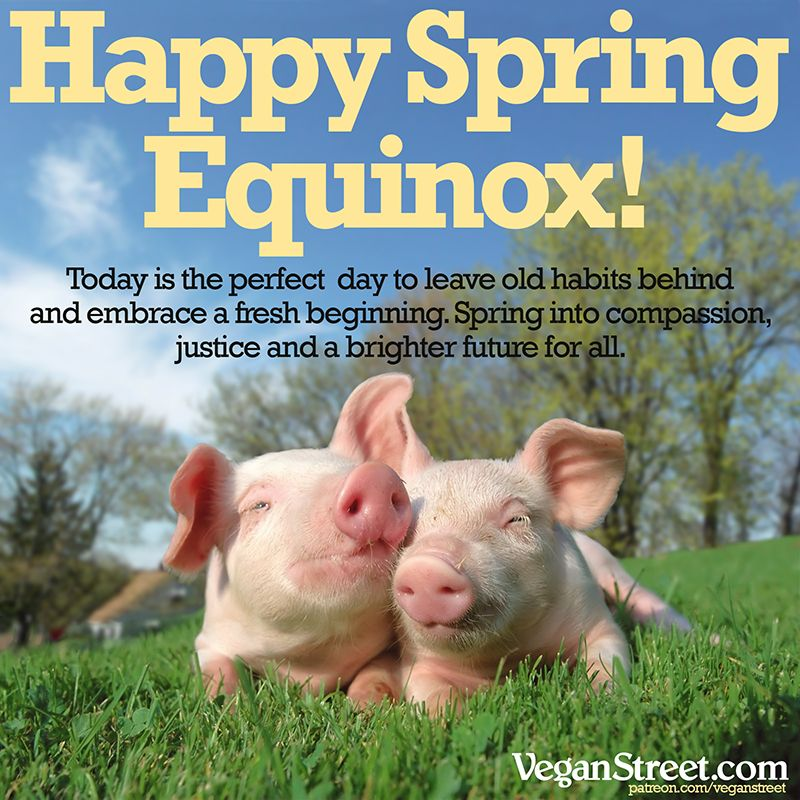 Happy 1st Day Of Spring From Vegan Street May It Be Full Of Compassion And Joy And Happy Autumnal Equinox To Friend Happy Spring Vegan Community Happy Vegan