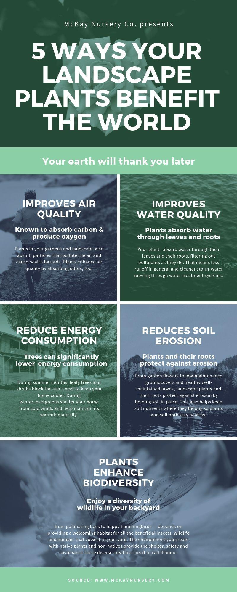 5 ways your landscape plants benefit the environment