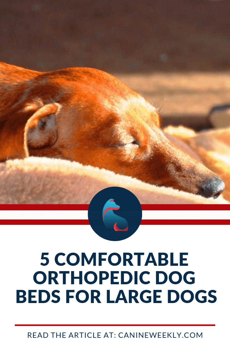 5 Best Orthopedic Dog Beds for Large Breeds in 2020